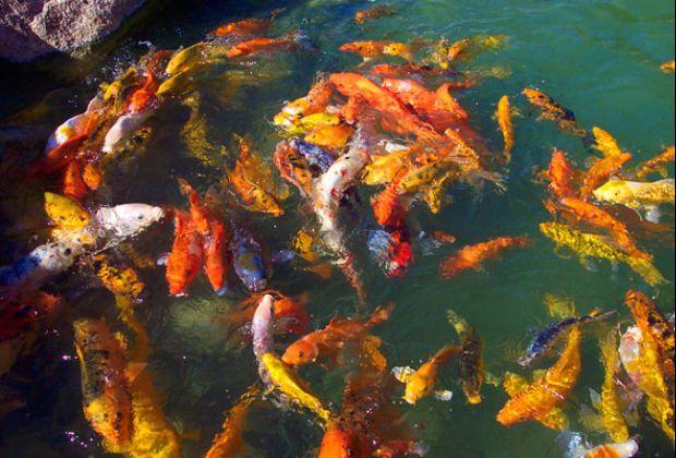 Pengecekan Kondisi Tanah Pembuatan Kolam ikan koi