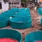 Penyetabilan Jatah Pakan Pada Harga Terpal Kolam Per Meter