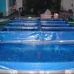Seringnya Kematian Ikan Lele Pada Harga Terpal Kolam Per Meter